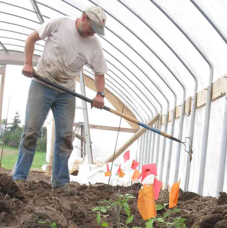 Henry Brockman working in his hoophouse