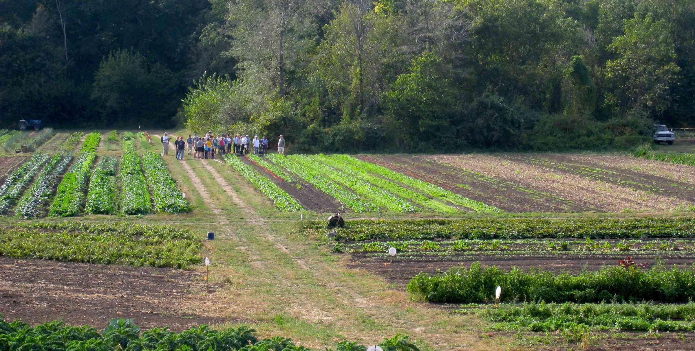 Henrys Farm A Diverse Sustainable Illinois Vegetable Farm Henrys