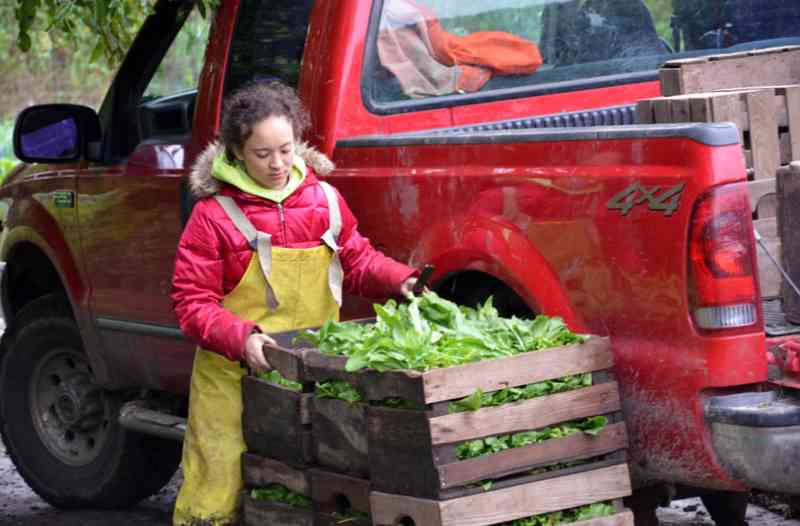Zoe Brock with vegetable crate in front of the Henry's Farm pickup truck