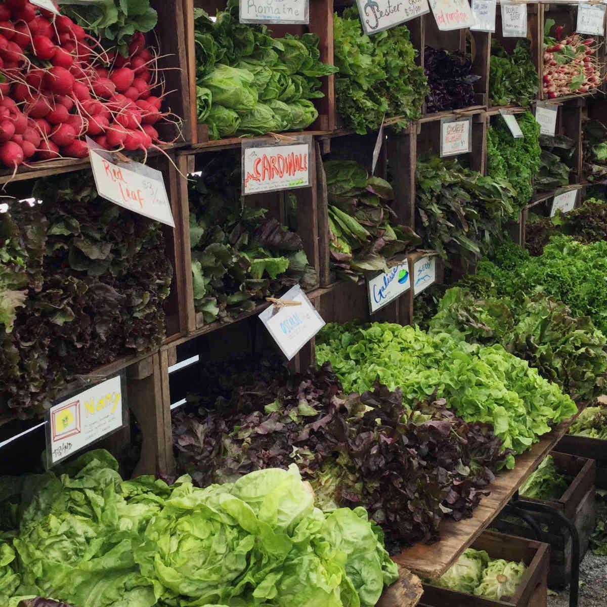 Evanston Market lettuces