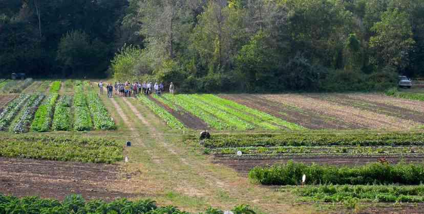 Henry's Farm field