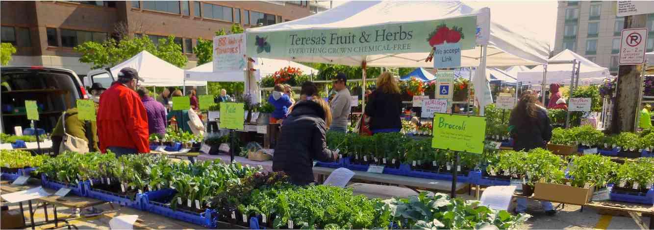 Teresa's Evanston Market Plant Start Stand